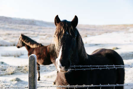 wire fence: Two horses in winter LANG_EVOIMAGES