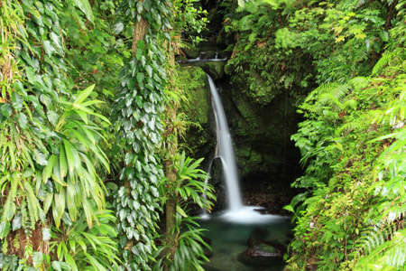 Waterfall and foliage, Dominica, The Caribbean