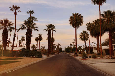 negative area: Palm trees and suburban road, Palm Springs, California, USA LANG_EVOIMAGES