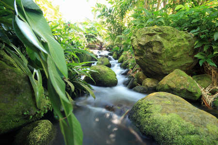 Close up view of stream and rocks, Deshaies, Guadeloupe, The Caribbean LANG_EVOIMAGES