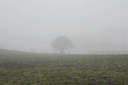 fenced in: Misty silhouettes of fence and bare tree in field