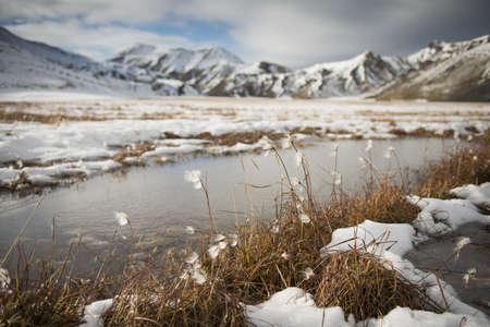 Cotton grass with snow, Landmannalaugar, Interior of Iceland