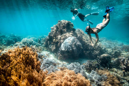 Two snorkelers perform scientific surveys on coral reef and fish, Raja Ampat, West Papua, Indonesia