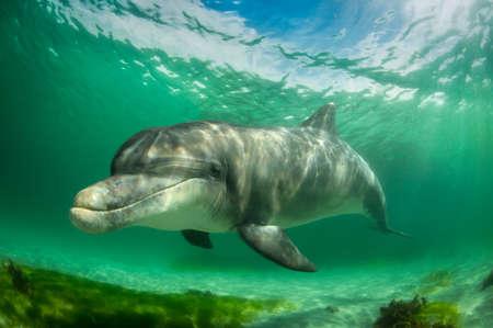 Bottlenose dolphin, Inisheer Island, Ireland