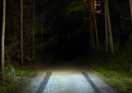 no skid: Tyre skid marks on rural forest road at night