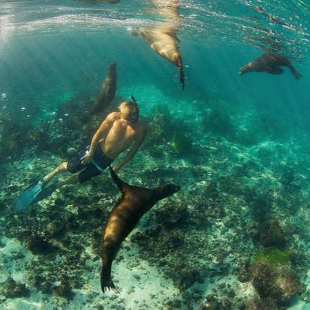 Freediver with sealions, Leon Dormido, Galapagos, Ecuador