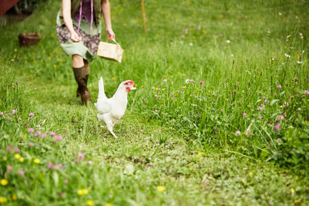 self sufficient: Woman in field chasing white hen LANG_EVOIMAGES