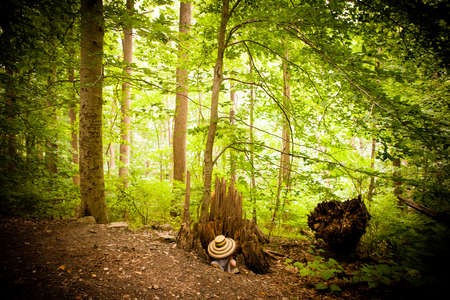 Mid adult woman hiding underneath hat in forest