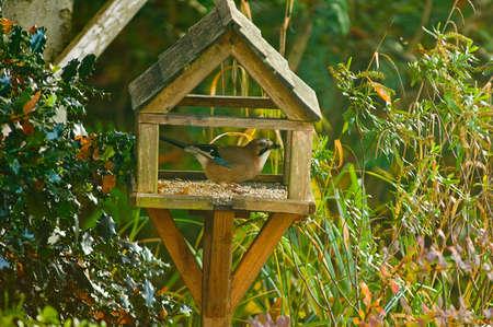 Alert bird feeding on garden birdhouse LANG_EVOIMAGES