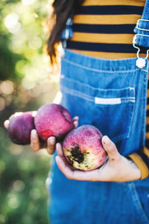 Young woman, in rural environment, holding apples, mid section LANG_EVOIMAGES