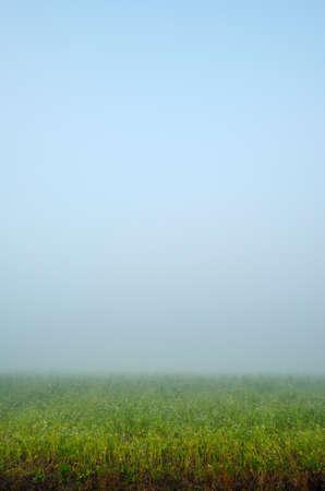 noord: Potato field in heavy fog, Amsterdam, Noord-Holland, Netherlands