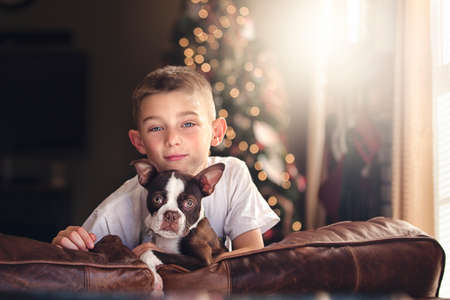 Portrait of boy and boston terrier on sofa in front of christmas tree