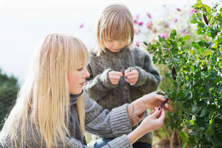 Mid adult woman and son tending bush in organic garden