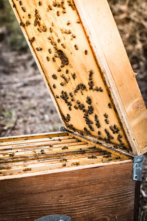Bees in hive LANG_EVOIMAGES