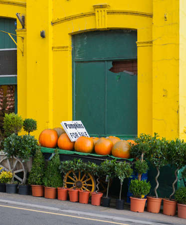 Pumpkins for sale outside florist, Llandeilo, Wales