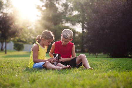 admired: Brother and sister sitting on grass looking down stroking Boston Terrier puppy LANG_EVOIMAGES