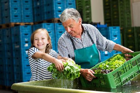 relaciones laborales: Abuelo, nieta, lavado, cajas, lechuga, mirar, cámara, sonriente