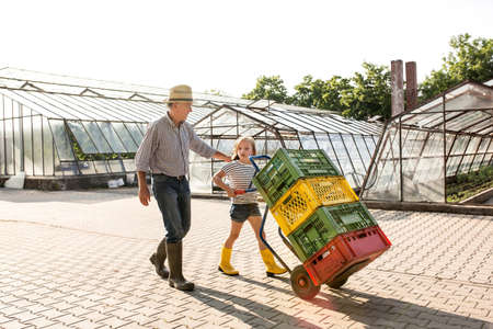 Grandfather and granddaughter pushing sack barrow stacked with crates