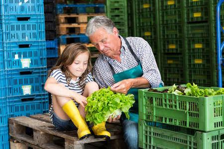 relaciones laborales: Abuelo y nieta controlando la calidad de la lechuga LANG_EVOIMAGES