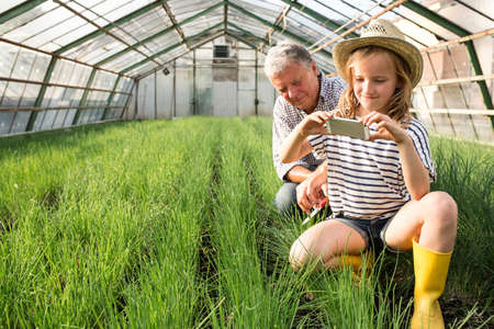 gifted: Granddaughter and grandfather in hothouse using smartphone to photograph chives