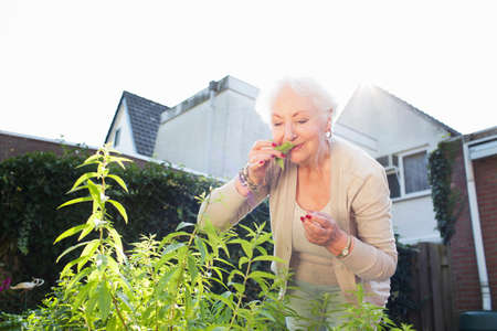 Senior woman in garden, smelling herbs