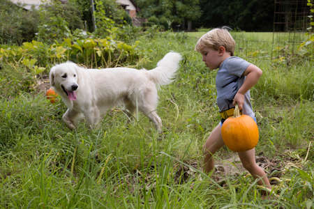 hurried: Boy with dog carrying heavy pumpkin on fruit farm