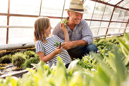 Grandfather and granddaughter in hothouse fooling around with plants smiling LANG_EVOIMAGES