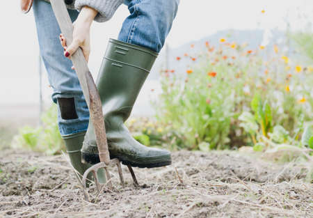 self sufficient: Cropped shot of woman wearing rubber boots digging organic garden with fork