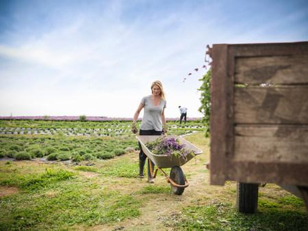 Worker pushing wheelbarrow