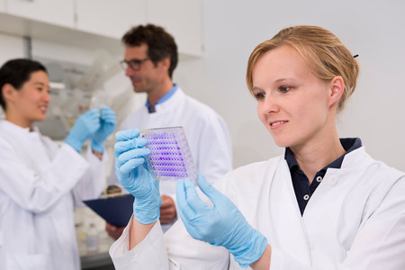Scientist with 96-well microtiter plate with crystal violet solution to examine toxicity
