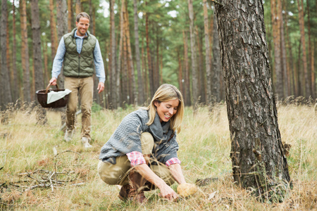 resourceful: Mid adult couple foraging for mushrooms in forest