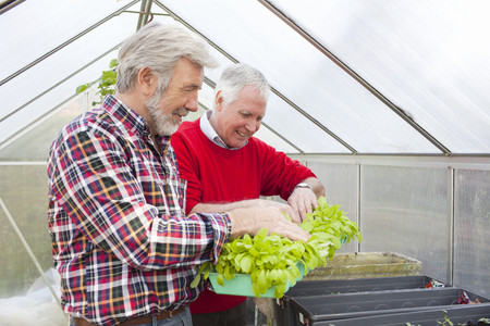 Senior male friends in greenhouse holding plants