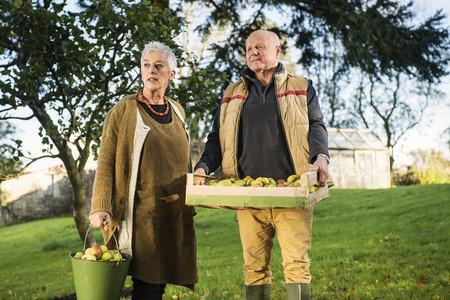 65 69 years: Senior couple carrying bucket and crate of apples