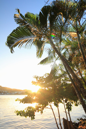 Palm trees and sunlight, Castries, St Lucia, Caribbean