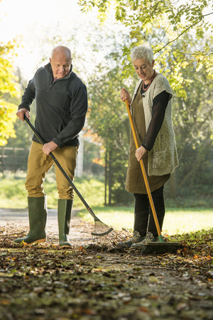 65 69 years: Senior couple raking leaves on path
