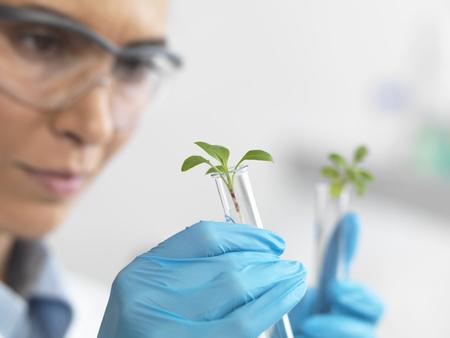 Scientist viewing seedling in test tubes under trial in lab