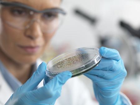 specimen testing: Female scientist examining micro organisms in petri dish LANG_EVOIMAGES
