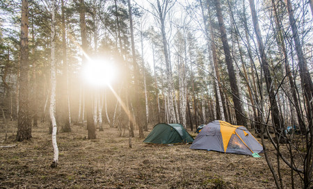 Two pitched tents in forest clearing