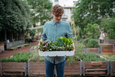 Man in garden holding tray of plants
