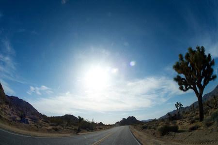 joshua tree national park: Empty desert road
