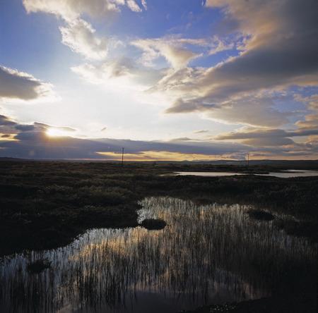 bogs: Grassy swamp in rural landscape LANG_EVOIMAGES