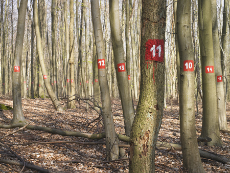numeric: Numbered trees in forest LANG_EVOIMAGES