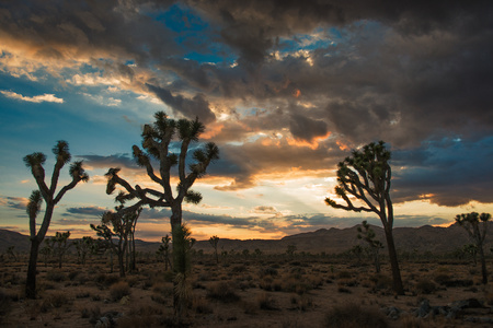 joshua: Dusk at Joshua Tree National Park, California, US LANG_EVOIMAGES