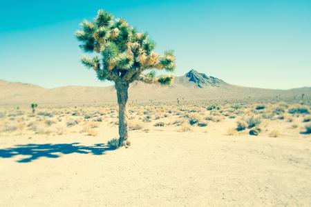 joshua tree national park: Lone joshua tree, Death Valley National Park, California, USA