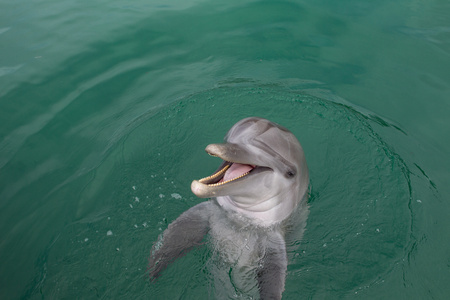 bahama: Laughing Dolphin LANG_EVOIMAGES