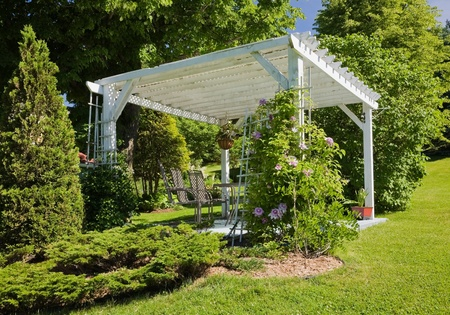 thuja occidentalis: White pergola with lawn and Cedar tree (thuja occidentalis)  border in backyard garden in spring season LANG_EVOIMAGES