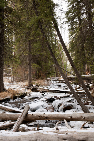 sawtooth national forest: Fallen trees over icy river in Sawtooth National Forest, Idaho