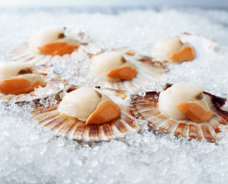 Raw queen scallops in shells on crushed ice LANG_EVOIMAGES