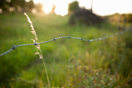 barbed wire fence: Barbed wire fence in field