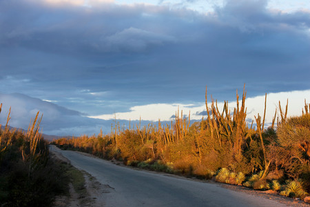 fort dauphin: Cacti and the road going through the Spiny Forest near fort Dauphin,Madagascar LANG_EVOIMAGES